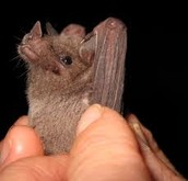 Life of the bat.