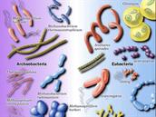 todos lo tipos de microorganismos