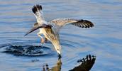 Aves terrestre