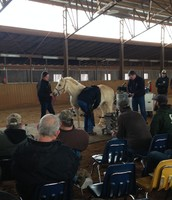 Farriers getting tips on how to shoe a pony even better!