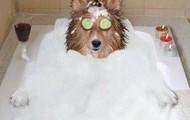 10% de réduction tous le shampooing pour chien
