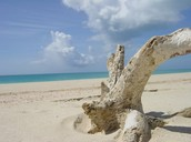 Sand Color and Origin
