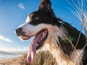 Tips & guides for your special pet's nutrition