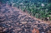 deforestation in amazon