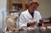 Forensic Dep studying fossils