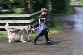 I WALK SMALL DOGS