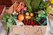 What Is The CSA????