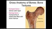 Parts of a Bone