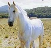Gandalf's Horse