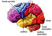 What causes premature brain aging?