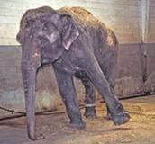 Animals in circus