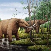A Mammoth eating