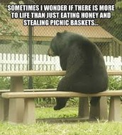 """Sometimes I wonder if there is more to life than just eating honey and stealing picnic baskets..."""