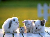 Baby Bunny , Hamster , Kitten and Puppy