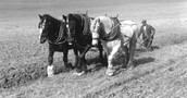 WWI: A War to Change Farmers' Roles in Canada