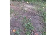 MORE MOIST GROUND COVERING CLOSER TO BANK OF STREAM