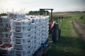 Farmers Preserving Food