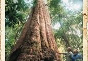 Fraser Island flora