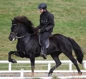 Interview with Guðmann Unnsteinsson, horse trainer