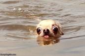 love to swim