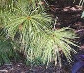 Taiga Plant Adaptations