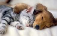 We're Pet Friendly!
