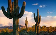Similie- I thought the saguaros looked like dinosaur mittens.