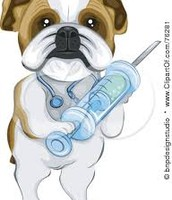 vaccinate your pets