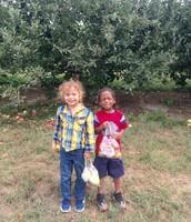 Picking Apples!