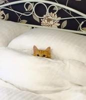 Завтрак в кровать!
