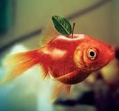Fish Apple
