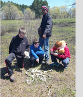 Finding bones of animals