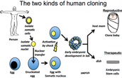 The Two Kinds of Human Cloning