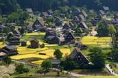 Ribosomes Village