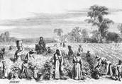 Slavery life on the Plantation