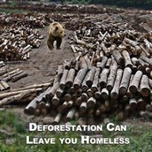 Bears have no more homes.