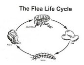 parasitic relationship