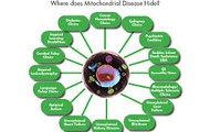 This is a photo of where Mitochondrial disease hides