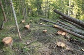 Stop cutting the trees!