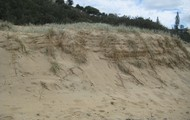 Frontal Dune