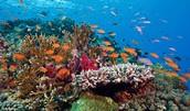 Los arrecifes de coral son hogares para muchos animales.