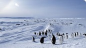 Animal life at Antarctica