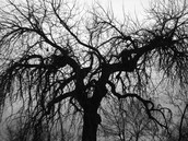 The creepy tree