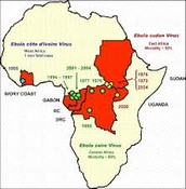 Origins of Ebola