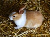 Rabbit at the rabbit farm