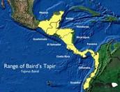 Baird's Tapir Range Map