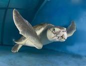 Pourquoi est ce que  tu supports Clearwater Marine Aquarium?