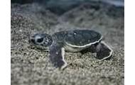 Turtles - Haiku