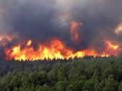 ~Wildfires