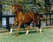 Secretariat Enjoying Life